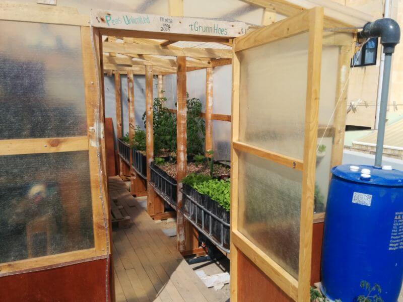 roof garden produce